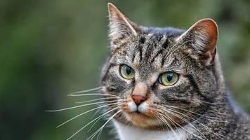 studie aus colorado: tierfotos bei dating-apps: männer mit katzen kommen schlechter an