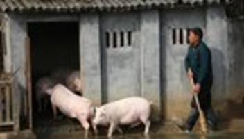 G4-Virus: Chinesische Forscher finden Schweinegrippe mit Pandemie-Potenzial