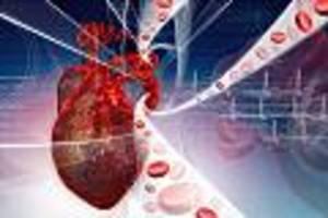 Was der untere Wert wirklich bedeutet - Forscher beenden Streit um Blutdruckwerte: Das ist der perfekte Messwert