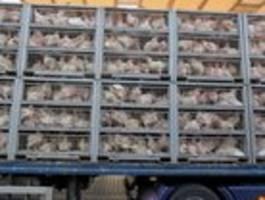Gibt keinen Grund, lebende Tiere tausende Kilometer zu transportieren