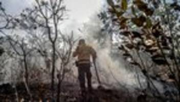 Brasilien: Regenwald am Amazonas brennt wie schon lange nicht mehr