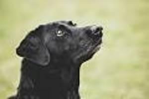 Jede Hilfe kam zu spät - Tragödie in Brasilien: Hund beißt Baby-Zwillinge zu Tode - vermutlich aus Eifersucht