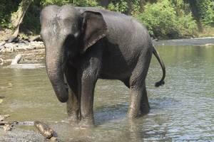 massensterben in botswana: naturdrama in bildern: hunderte tote elefanten beunruhigen experten