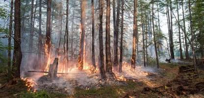 Klima-Krise: Warum jetzt sogar Wälder den Planeten aufheizen könnten