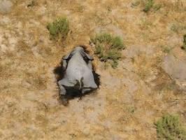 Tote Dickhäuter in Botswana: Ist Corona am Elefantensterben schuld?