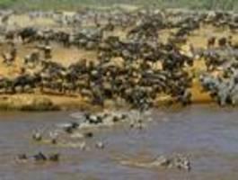 Die Wilderei in Afrika nimmt zu
