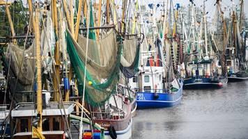 Erzeugergemeinschaft: Einige Krabbenfischer überstehen nicht