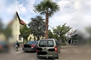 ordnungswidrigkeit: palme ragt meterhoch aus pkw – polizei stoppt saarländer