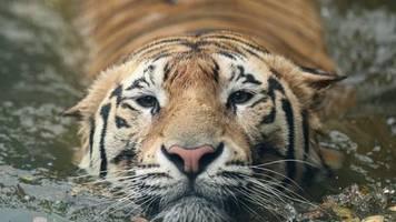Für Wildhüter: Millionen Euro zusätzlich für Artenschutz in Corona-Zeiten