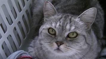 Coronavirus bei Tieren: Studie belegt: Menschen können ihre Haustiere mit Corona infizieren