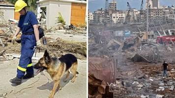 Auch Deutschland ist dabei: Ärzte, Suchhunde, Bergungsspezialisten – so hilft die Welt in Beirut