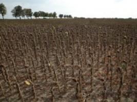Klimawandel: Erderwärmung macht extreme Dürre in Europa wahrscheinlicher