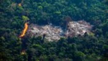 umweltzerstörung: gut fürs abholzen!