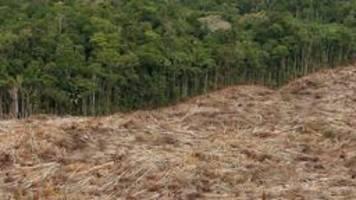 illegale rodung im amazonas steigt um ein drittel
