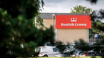Corona-News: 150 Mitarbeiter infiziert - Dänischer Schlachthof muss schließen