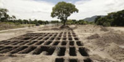 Die Wahrheit: Das geheime Sterben der Bäume
