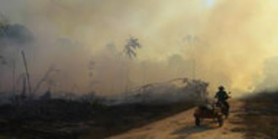 """Geologe über Waldbrände am Amazonas: """"Freifahrtschein der Regierung"""""""