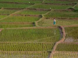 Ökologie: acker mit ausdauer