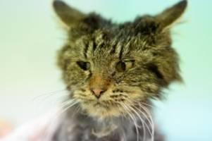 Tierquälerei: Katzen gequält: Belohnung zur Ergreifung der Täter erhöht