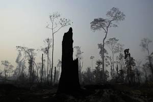bolsonaro bezeichnet berichte über brände im amazonas als lüge