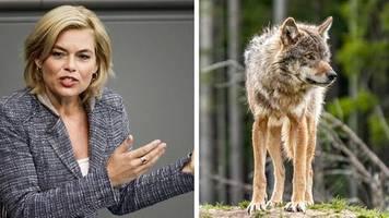 Kritik von allen Seiten: Vor sechs Monaten wurde der Abschuss von Wölfen erleichtert – jetzt will Klöckner mehr