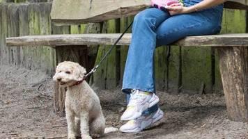 gefahr für vierbeiner?: vergiftete leckerlis, rasierklingen in fleischstücke – vermehrte attacken auf hunde