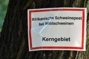 Agrar: Weitere Wildschweine in Brandenburg mit Schweinepest
