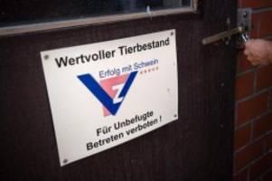 agrar: bund sagt brandenburg weitere hilfe gegen schweinepest zu