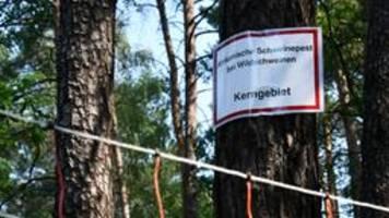 kampf gegen schweinepest: agrarministerium verspricht hilfe