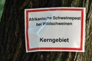 agrar: sieben weitere schweinepest-fälle in brandenburg