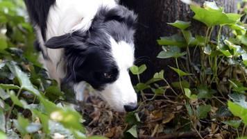 nordhäuser polizei warnt vor vergifteten hundeködern