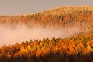 Kann der Nationalpark Bayerischer Wald dem Klimawandel trotzen?
