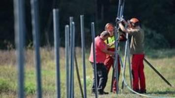 Brandenburg: Mit Zäunen gegen die Schweinepest