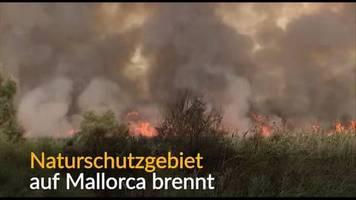 video: feuer in naturschutzgebiet auf mallorca
