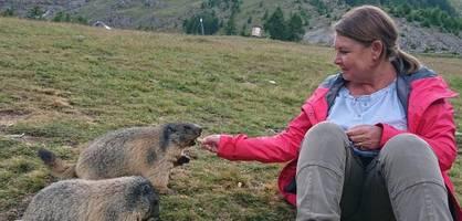 im wallis fressen murmeltiere urlaubern aus der hand