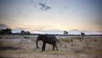 elefantensterben: bakterien sind verantwortlich für tod von elefanten in simbabwe