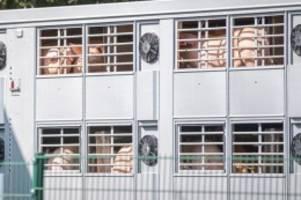 Lebensmittel: Schlachthof im emsländischen Sögel hat 36 Corona-Fälle