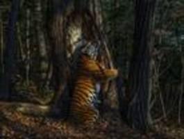 russe wird mit aufnahme von sibirischem tiger naturfotograf des jahres