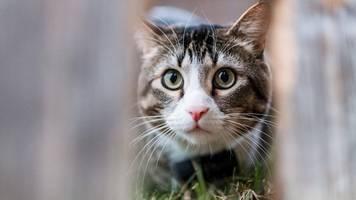 delitzsch: katze von tierquäler gehäutet und zerstückelt