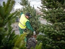 corona treibt die preise: weihnachtsbäume werden teurer