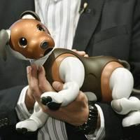 Roboterhund Aibo: Kleine Roboter helfen in Japan bei Corona-Einsamkeit
