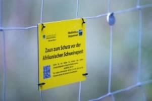 Agrar: Schweinepest: FDP will stabilen Zaun an der Grenze zu Polen
