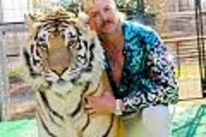 """stretch-limousine steht bereit - """"tiger king"""" joe exotic ist sicher: donald trump wird ihn begnadigen"""