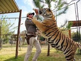 tiger king ist guter dinge: trump erwägt wohl joe exotics begnadigung