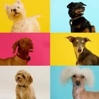 Social-Media-Erfolg: Erste Weihnachts-Single nur für Hunde: So lustig reagieren die Vierbeiner auf den Hundesong