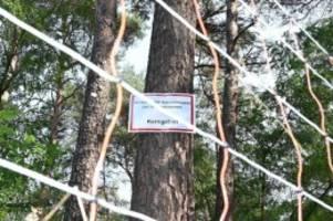 Agrar: Weitere ASP-Fälle in Brandenburg: Funde im Kreis Oder-Spree