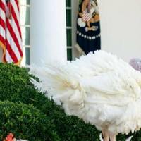 Donald Trump: US-Präsident begnadigt letzten Truthahn