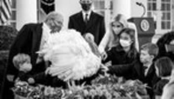 Corona-Pandemie in den USA: Ein Superspreader-Thanksgiving?
