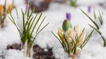 Kalte Jahreszeit: Den Garten winterfest machen: So überdauern Ihre Pflanzen Frost, Eis und Schnee