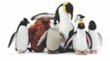 jugendliteraturpreis für antarktisbuch: vom südpol lernen